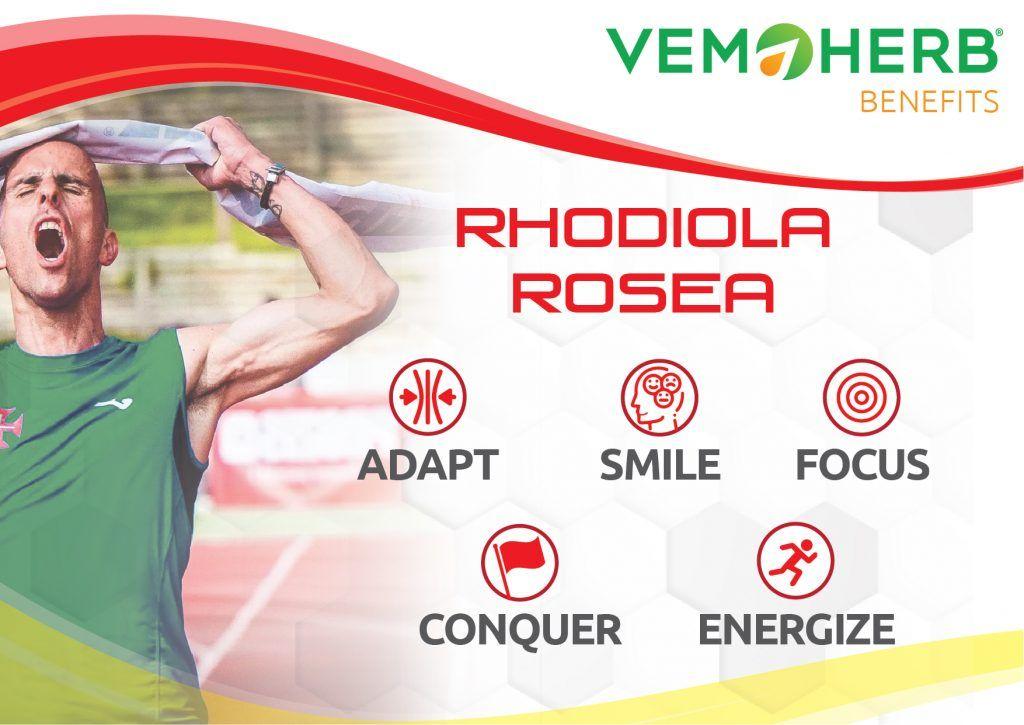 Benefits Rhodiola Rosea