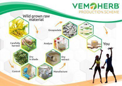 Production Scheme: VemoHerb Solidago