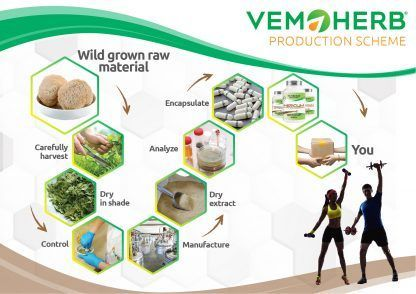 Production Scheme: VemoHerb Hericium