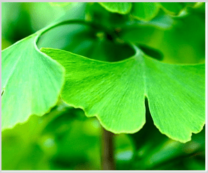 VemoHerb_ginkgo_hypericum_supplement